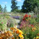 colourful Earthwise Garden June